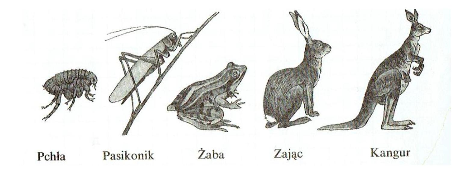 Porównanie organizmó żywych.