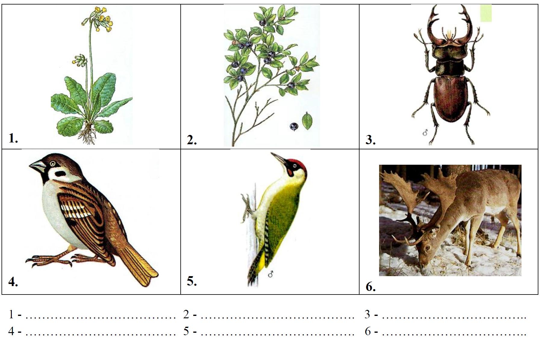 Rozpoznawanie gatunków roślin i zwierząt.