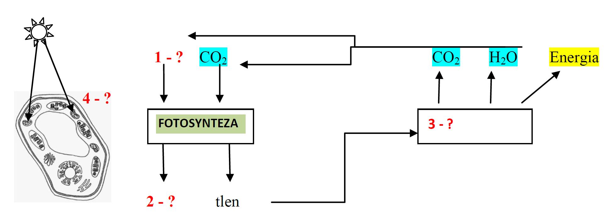 Czynniki niezbędne do przeprowadzenia procesu fotosyntezy.