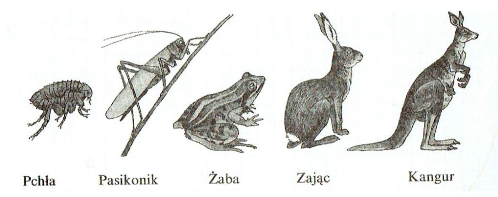 Zwierzęta zamieszkujące różne środowiska, prowadzące odmienny tryb życia
