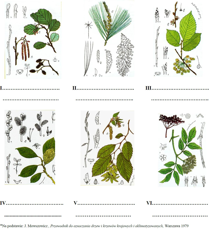 Rozpoznawanie gatunków drzew.
