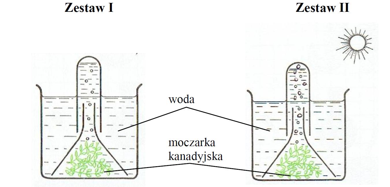 Zestaw doświadczalny do badania procesu fotosyntezy.