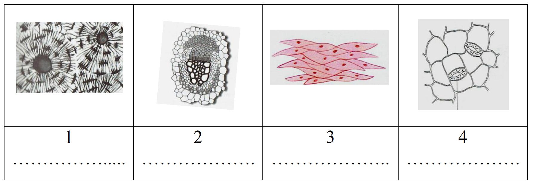 Fragmenty tkanek roślinnych i tkanek człowieka.