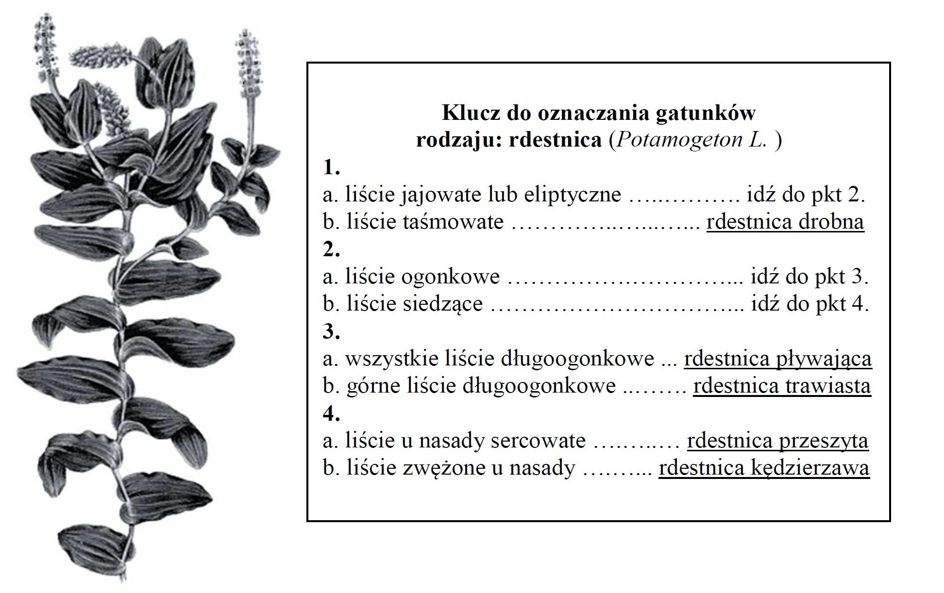 Klucz do oznaczania roślin.