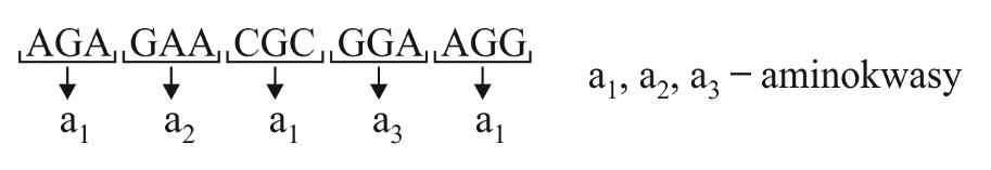 Fragment nici kwasu nukleinowego oraz sposób odczytywania informacji genetycznej.