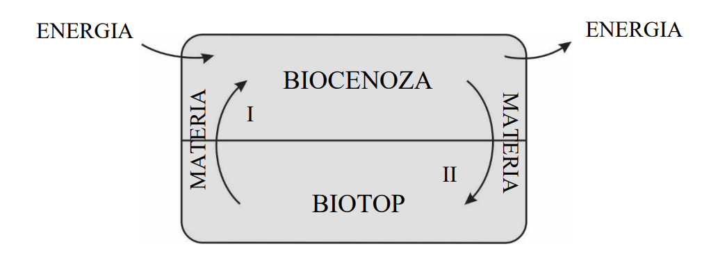 Ekosystem składa się z części ożywionej, czyli biocenozy, i części nieożywionej, czyli biotopu.