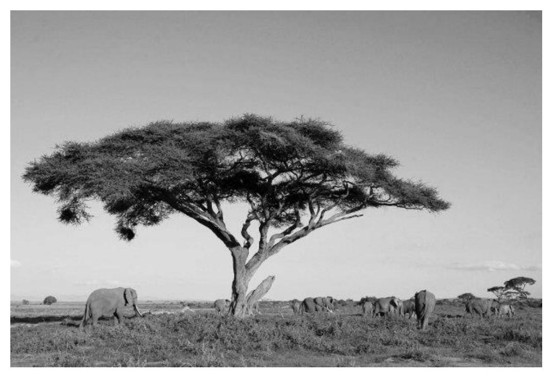 Na zdjęciu przedstawiono wybrany krajobraz występujący w Afryce.