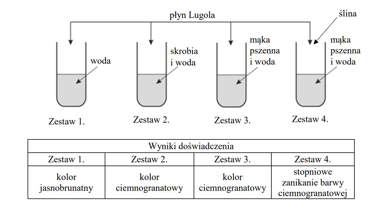 Do każdej probówki dodano kilka kropli brunatnego płynu Lugola.