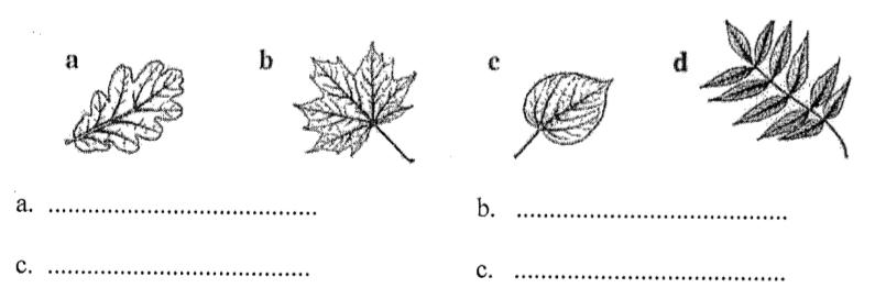Rozpoznawanie gatunków drzew i grzybów