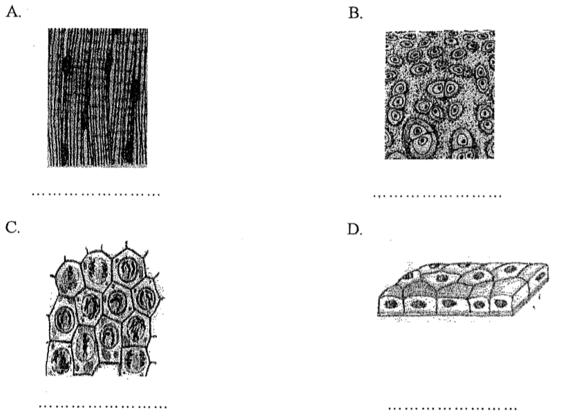 Rozpoznawanie tkanek